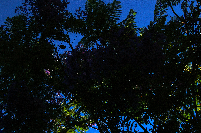 Dark Tree Canopy