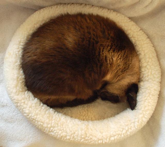 Starfleet in her cat ring