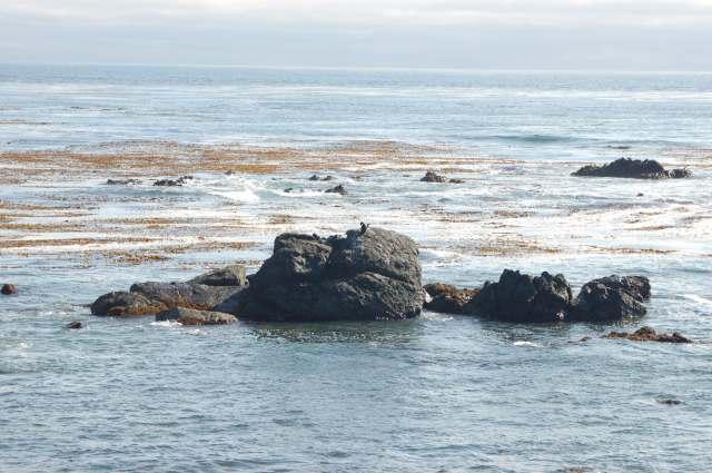Pacific Ocean Coastal Rocks and Kelp Beds