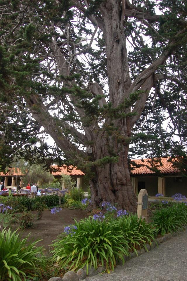 Mission San Carlos at Carmel Courtyard Tree and Stone Marker