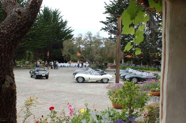 Jaguars Under Grape Leaves