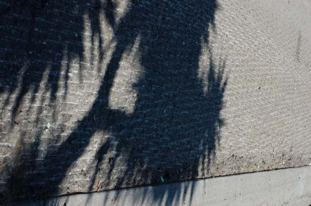 Shadow of a Yucca on scarred asphalt