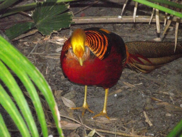 Brilliantly Colored Tropical Bird