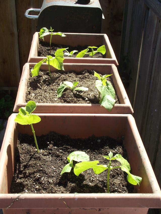 Tiny Garden square foot pots