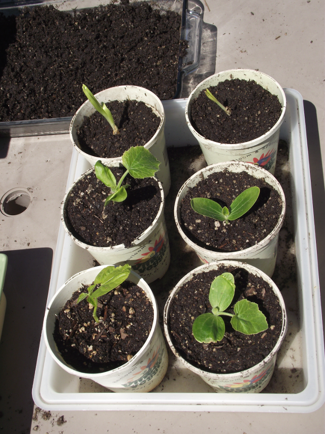 Tiny Garden round sprouting pots