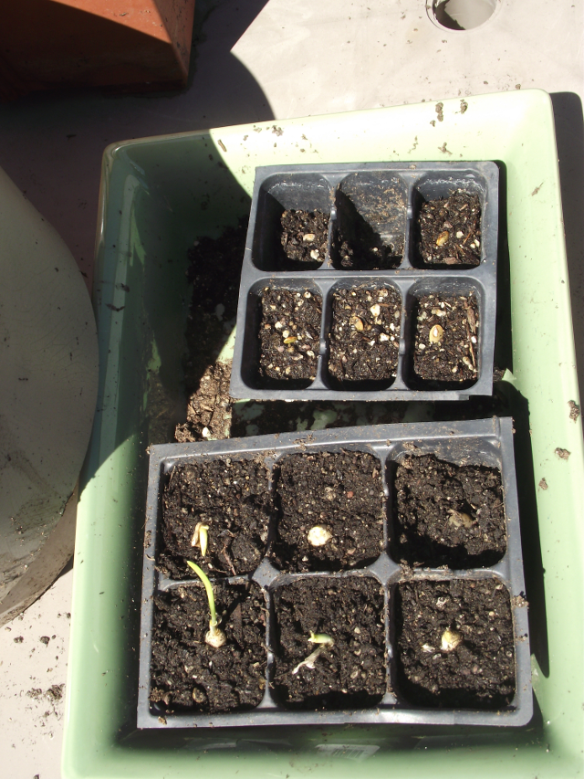 Tiny Garden 6-pack trays