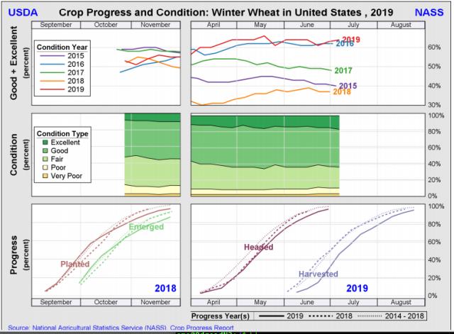 Winter Wheat 12 Nov 2019