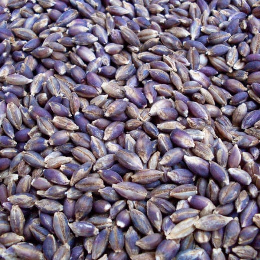 Purple Valley Barley